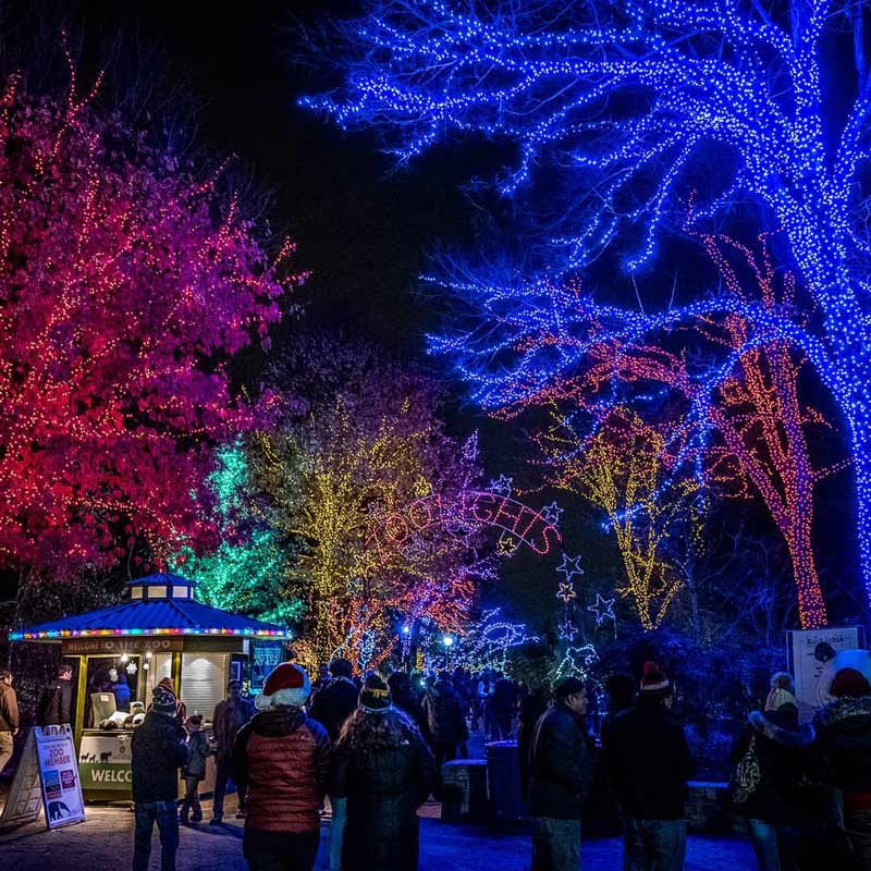 the best holiday light displays events in washington dc