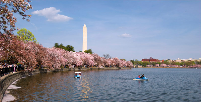 Boating on the Tidal Basin - Cherry Blossoms in Washington, DC