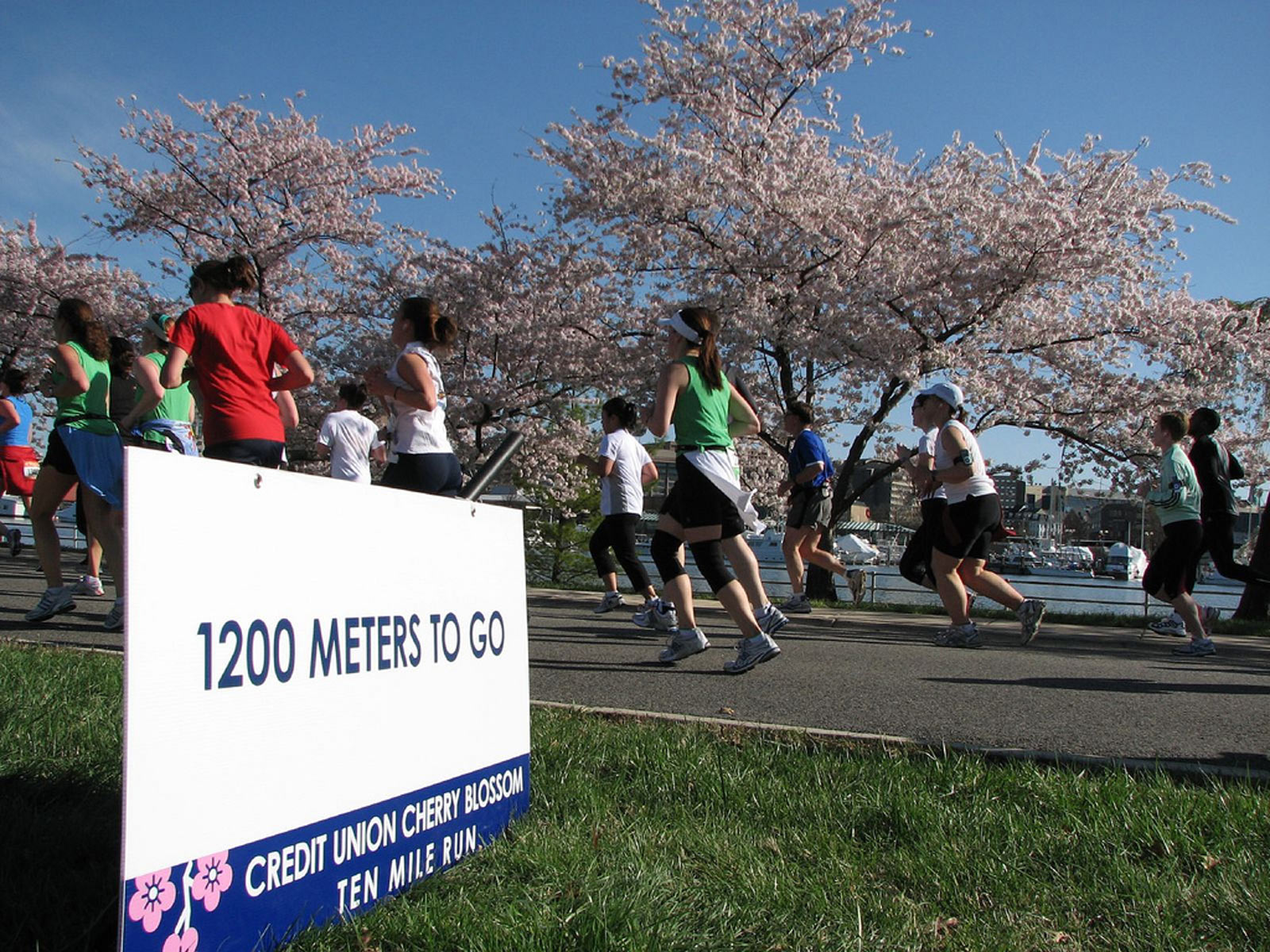 Credit Union Cherry Blossom Ten Mile Run and 5K Run-Walk - Washington, DC
