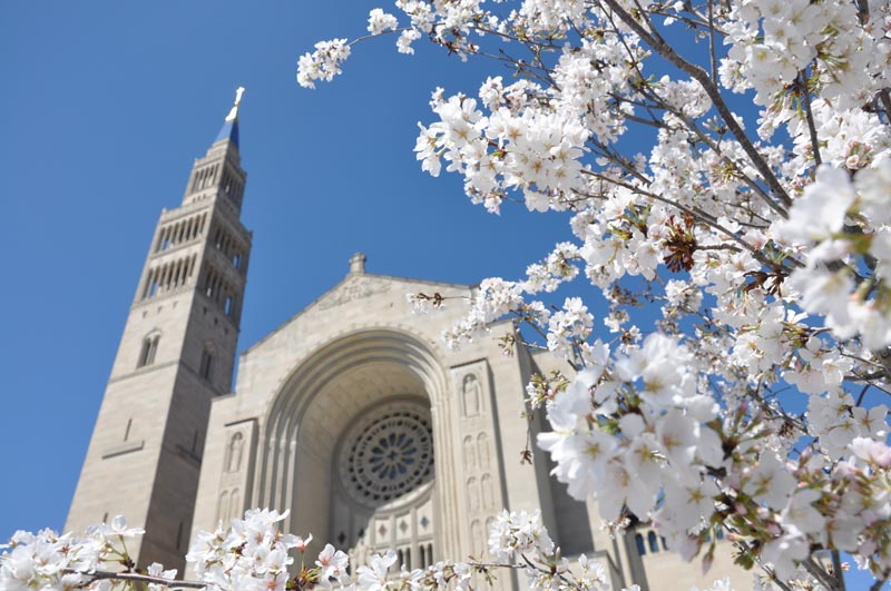 Cherry blossom trees at the Basilica of the National Shrine of the Immaculate Conception - Where to photograph cherry blossoms this spring in Washington, DC