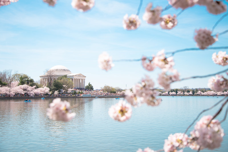 Guide to the National Cherry Blossom Festival in Washington, DC - The Best Things to Do This Spring in DC