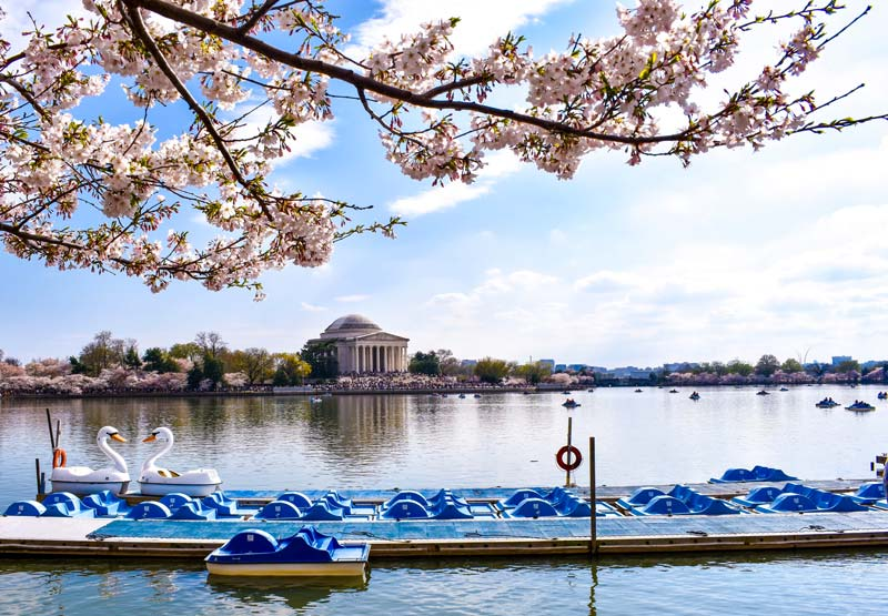 Tidal Basin paddle boats with the cherry blossoms - Where to photograph the cherry blossoms during the National Cherry Blossom Festival this spring in Washington, DC