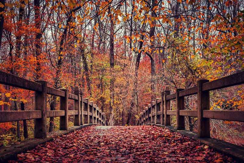 @christine501 - Fall foliage in Rock Creek Park - Outdoor parks and things to do in Washington, DC