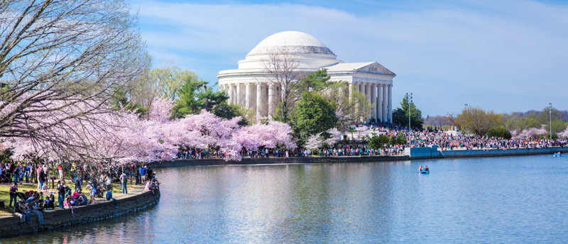 Tidal Basin and Jefferson Memorial during the National Cherry Blossom Festival - Spring in Washington, DC