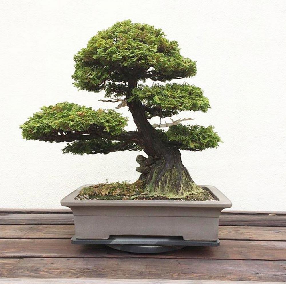 U.S. National Arboretum's Bonsai & Penjing Museum