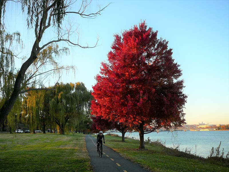 Fall cycling on Mount Vernon Trail along Potomac River - Outdoor waterfront recreation in Washington, DC