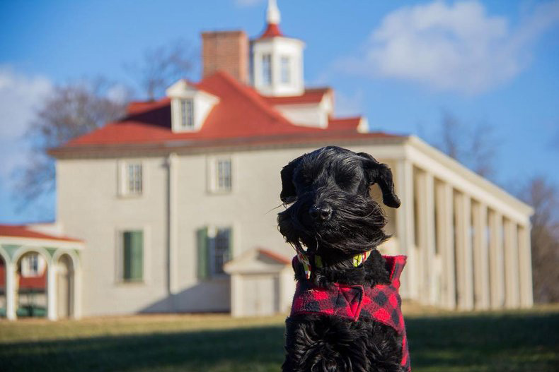 Izzy the dog at Mount Vernon