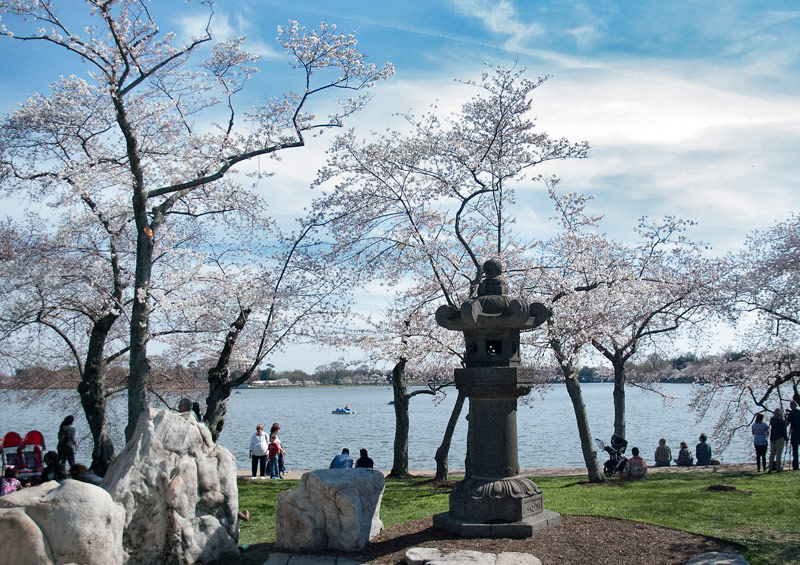 Japanese Lantern on the Tidal Basin surrounded by cherry blossoms - Washington, DC