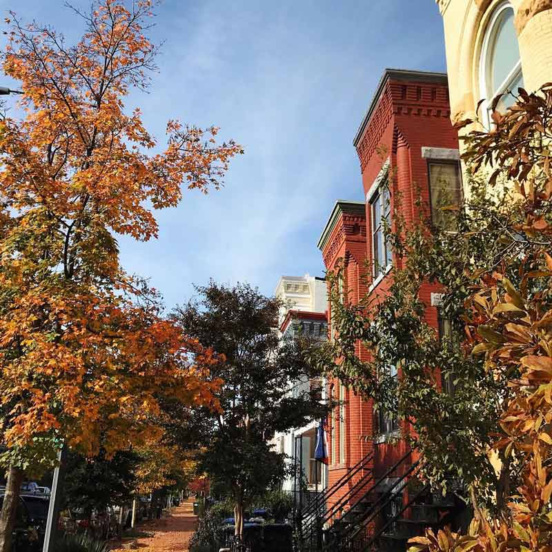 @katharinaeleni - Fall foliage in Washington, DC's historic Capitol Hill neighborhood