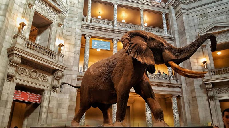 @lobbycreepers - Henry the Elephant at the Smithsonian National Museum of Natural History - Free things to do in Washington, DC