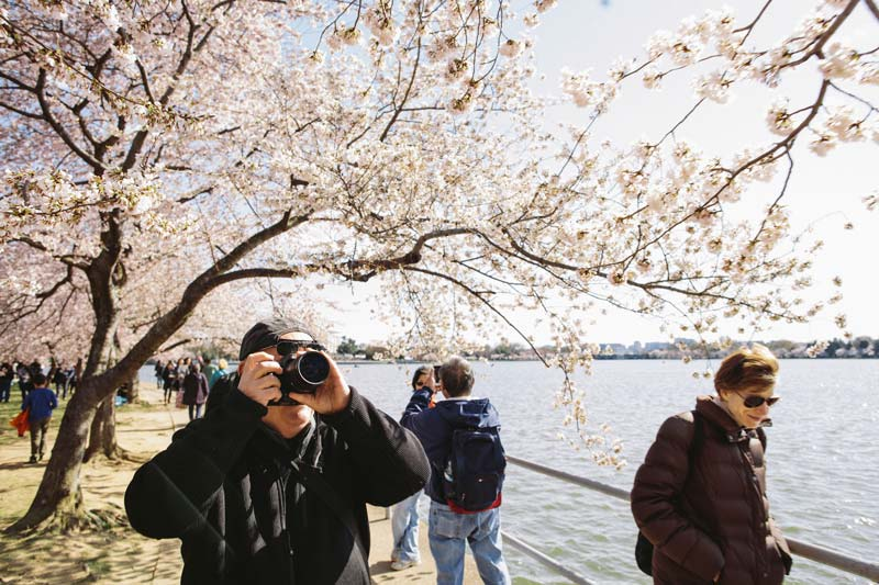 The Best Places To Photograph Cherry Blossoms In Washington Dc