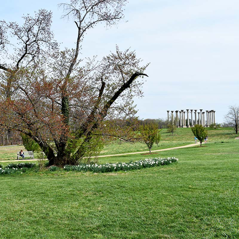 United States National Arboretum in Washington, DC - Free family-friendly outdoor attraction