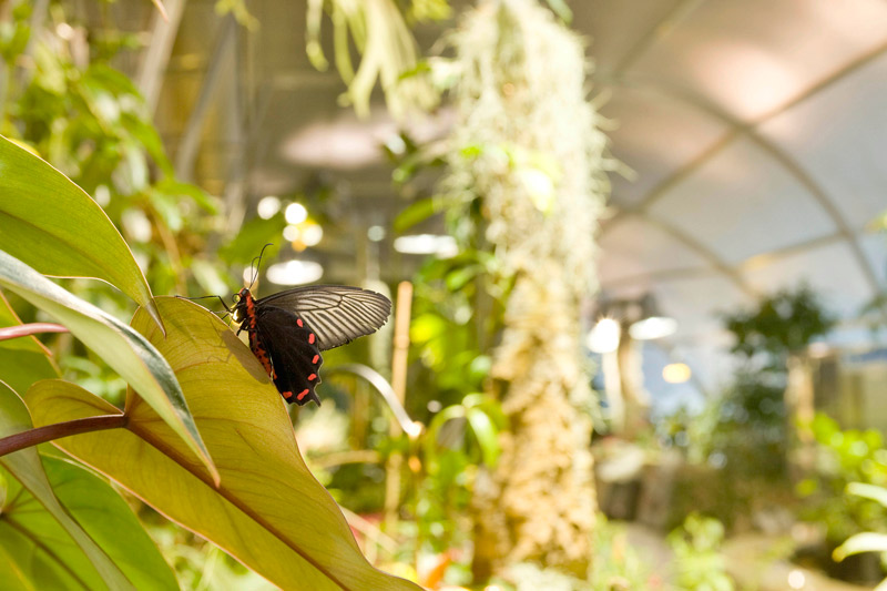 Smithsonian Museum of Natural History Butterfly Pavilion