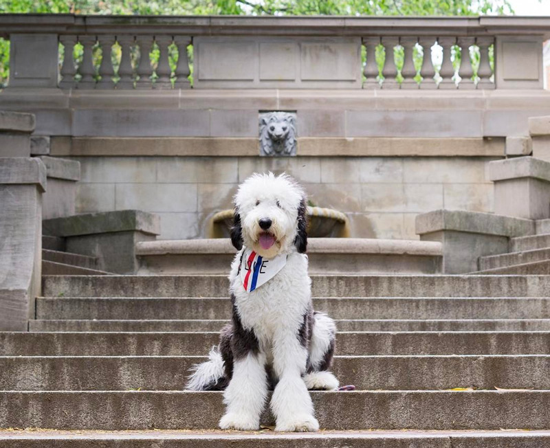 @otis_unleashed - Dog on Spanish Steps near Dupont Circle and Kalorama in Washington, DC