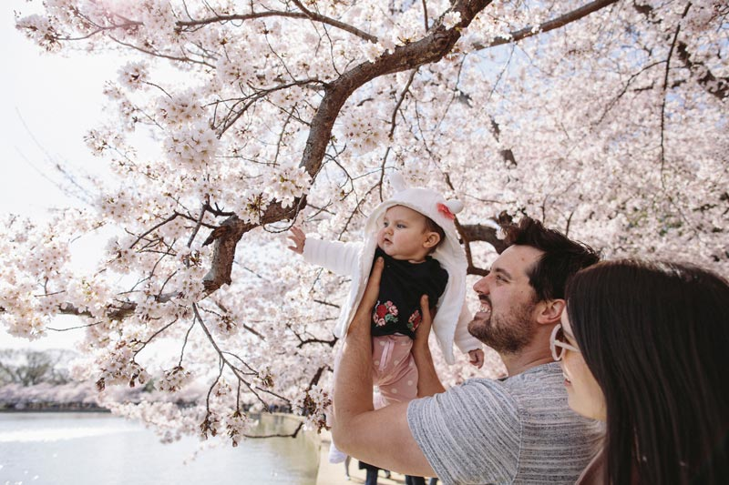 Family at the National Cherry Blossom Festival - The best things to do this spring in Washington, DC