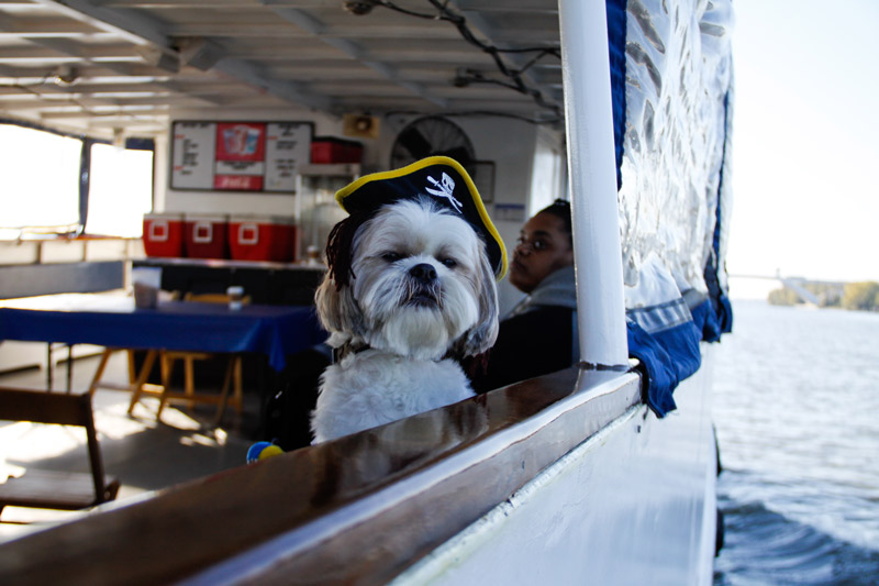 Potomac Riverboat Company dog-friendly boat cruises in Alexandria - Boating experiences and transportation in and around Washington, DC