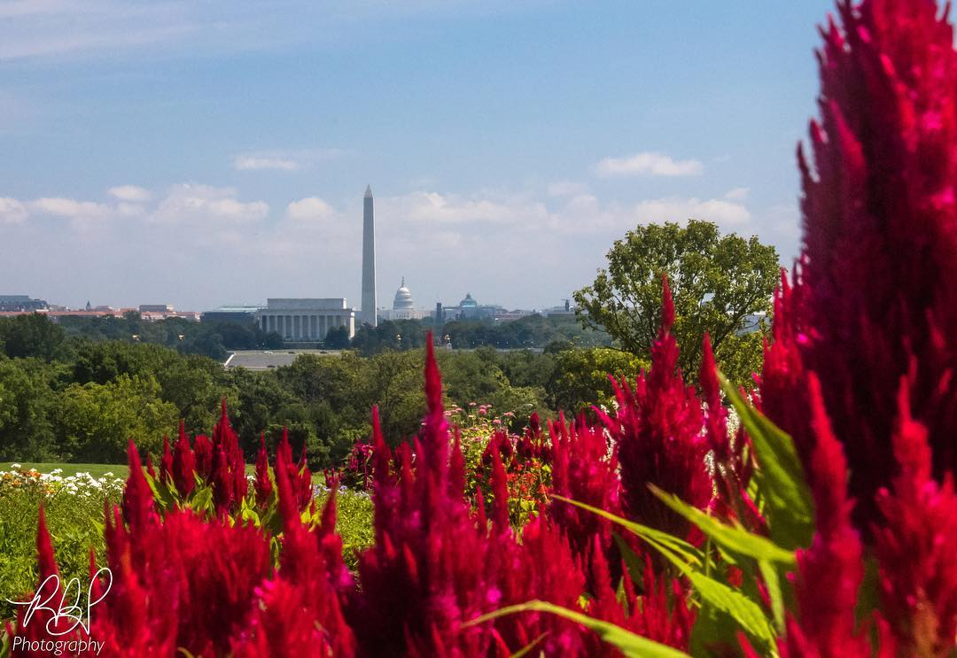 @rbp_photography_usa - View of Washington, DC from the Netherlands Carillon - Free spring activity near Washington, DC