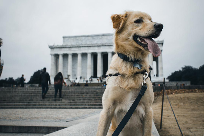 Dog friendly dc best places to bring your pets washington solutioingenieria Image collections