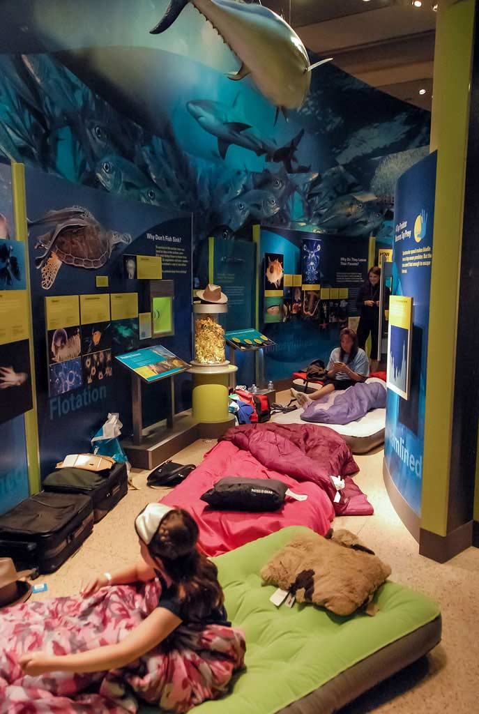 Smithsonian Sleepover at the National Museum of Natural History in Washington, DC