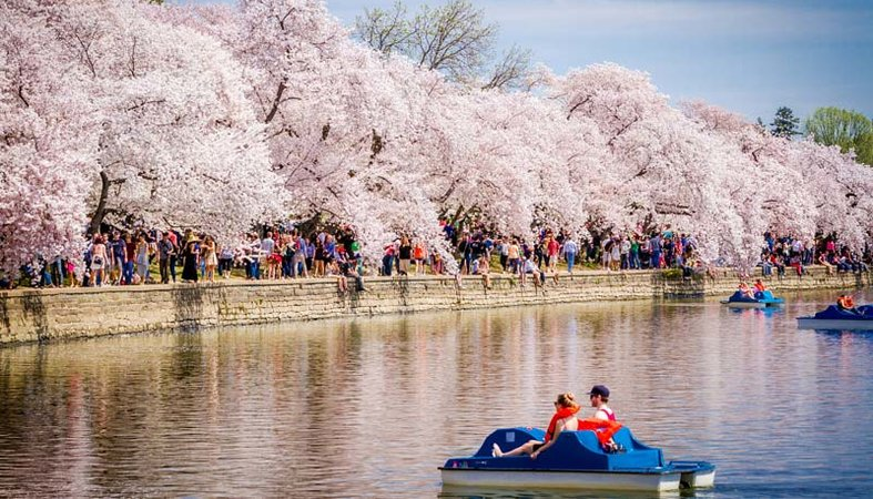 Couple on Tidal Basin Paddleboats - National Cherry Blossom Festival - Washington, DC