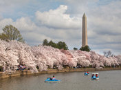 National Cherry Blossom Festival - National Mall - Washington, DC