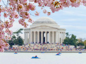 @markeisenhower - Paddleboats by Jefferson Memorial cherry blossoms - Washington, DC