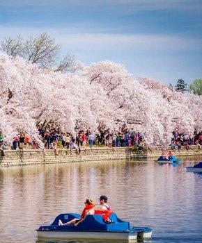 Couple on Tidal Basin Paddleboats - National Cherry Blossom Festival - Washington, DC
