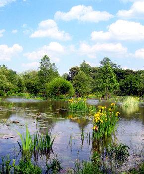 Kenilworth Park & Aquatic Gardens - Anacostia - Washington, DC