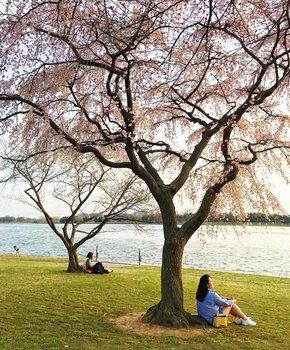 @mollymooooo - Springtime scene along the Potomac River - Things to do in Washington, DC