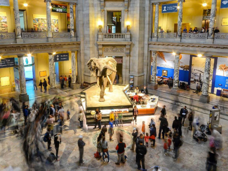 A Night At The Museum Of Natural History