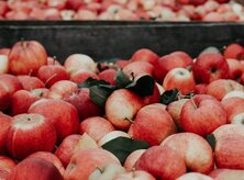 @centralplaceva - apples at the FreshFarm Farmers Market