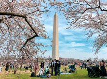 Free and family-friendly National Cherry Blossom Festival Blossom Kite Festival on the National Mall - Must-see Washington, DC events