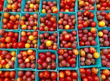 Farmers' Market Fresh Tomatoes - Washington, DC