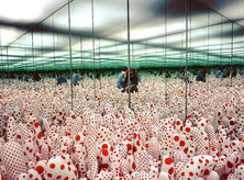 @feefiforum - Phalli's Field at Yayoi Kusama's Infinity Mirrors Exhibit - Hirshhorn Museum in Washington, DC