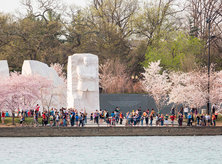 Martin Luther King Jr. Memorial in Spring