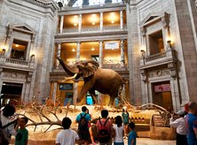 Museums for Days - Smithsonian National Museum of Natural History - Washington, DC