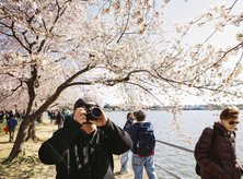 The Best Places to Photograph Cherry Blossom Trees in Washington, DC