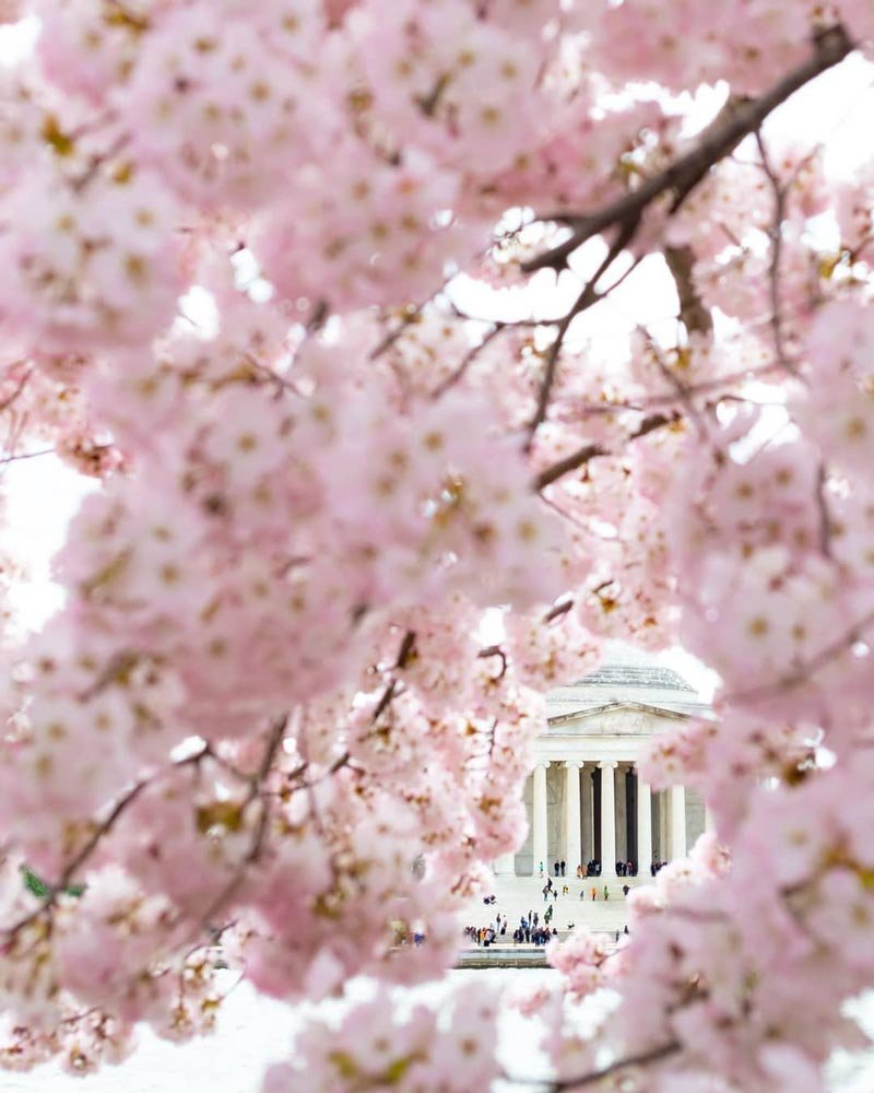 May The 4th Be With You Dc: Guide To The 2019 National Cherry Blossom Festival In