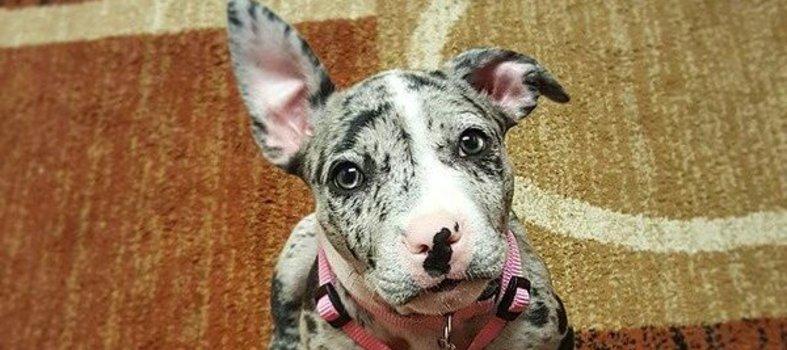 8) Para los amantes de las mascotas