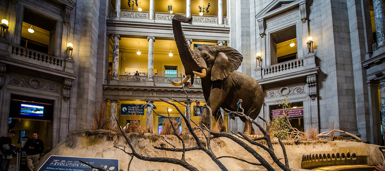 Natural History Museum Dc Events