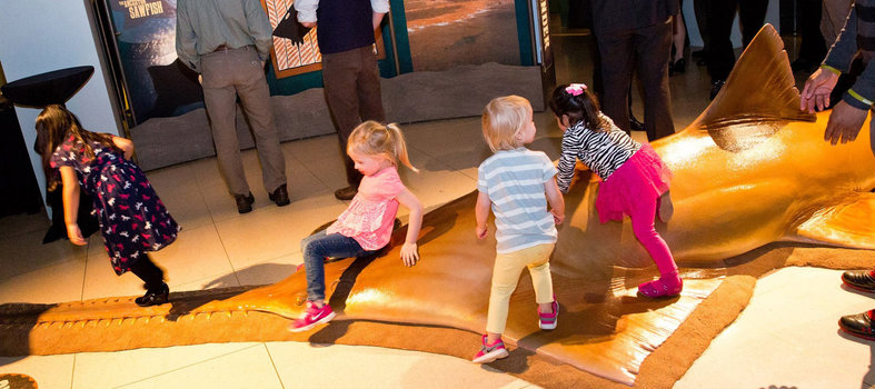 Get wild at the National Geographic Museum