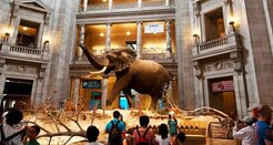Smithsonian Museums - Smithsonian National Museum of Natural History - Washington, DC