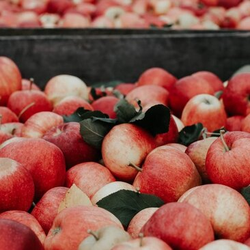 @centralplaceva - apples at the FreshFarm Farmers Market