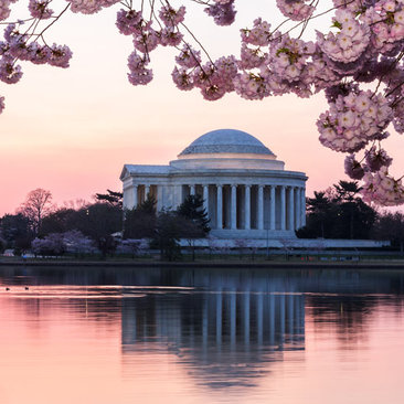 Hotel Packages for Cherry Blossom Season in Washington, DC