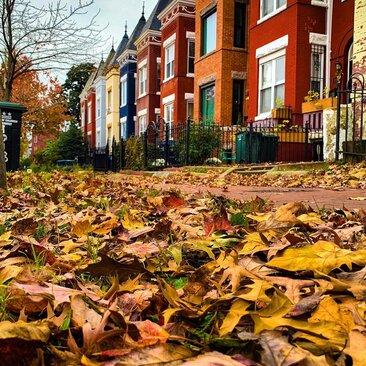 @districtninja - Fall Leaves in DC Neighborhood
