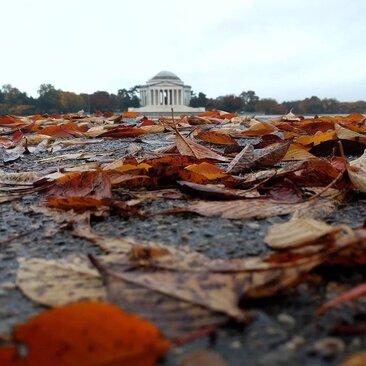 @farren.photography - Fall in DC