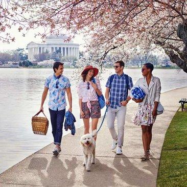 Friends walking along Tidal Basin & cherry blossoms - Spring in Washington, DC