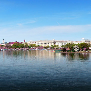 Your Ultimate Guide to Spring & Cherry Blossoms in Washington, DC