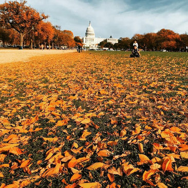 @kathleen.aiko - Fall foliage on the National Mall - Washington, DC