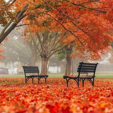 @travelswithnano - washington dc fall foliage